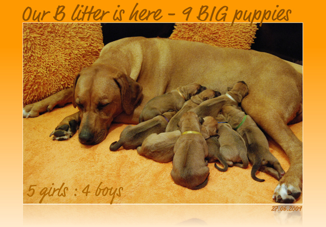 B puppies are here