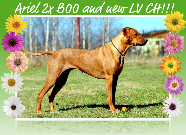 Ariel 2x BOO in Marupe and new LV Champion!!!